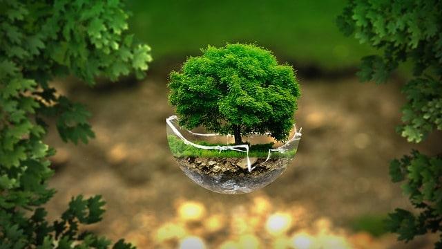 Che cos'è la Carbon Neutrality? | Te lo spiega Zapper!